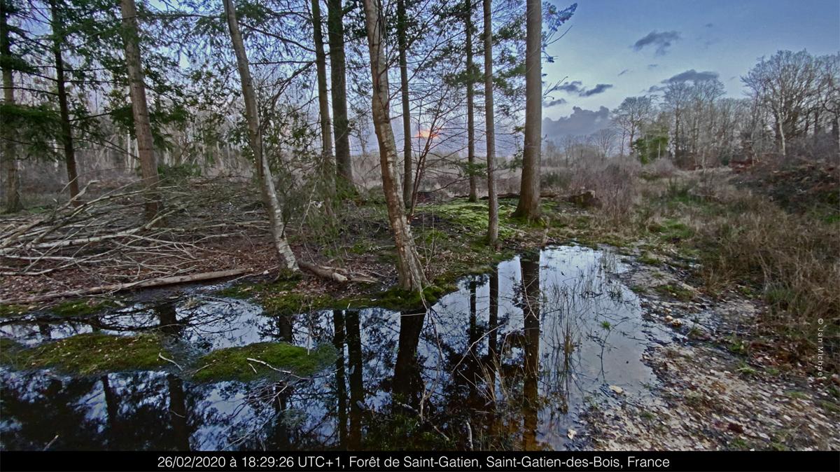 Forêt Saint Gatien des bois, Normandie