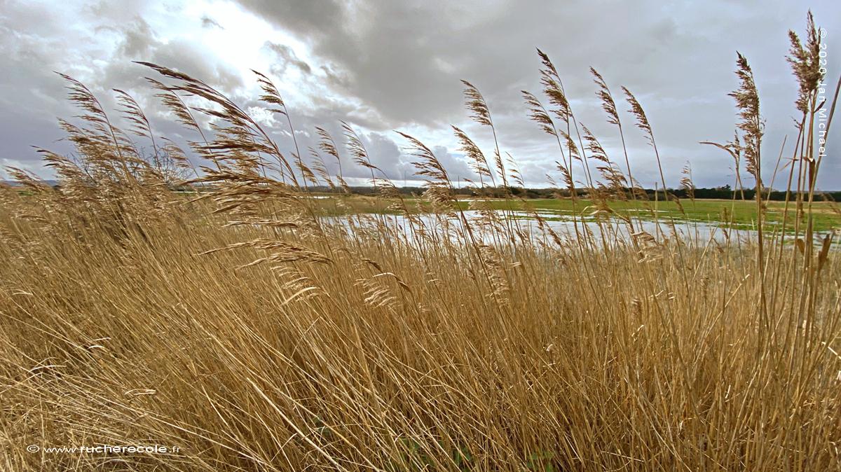 Marais de la Touques,Bonneville en Calvados
