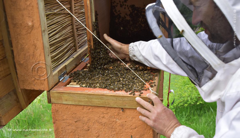 enruchement ruche Mellifera