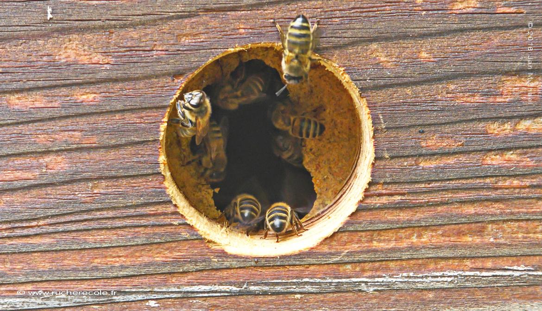 au trou de vol - ruche Warré