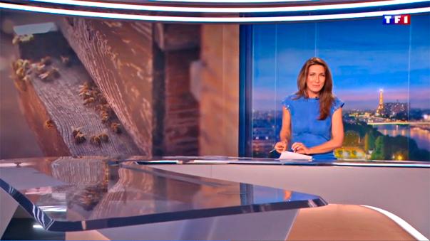 JT-TF1 -reportage en apiculture naturelle