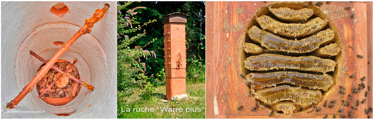 ruche Warré alternatif