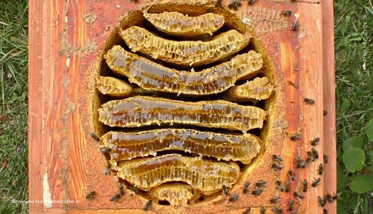 """La ruche spéciale """"Warré plus"""""""