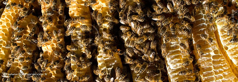 apiculture naturelle